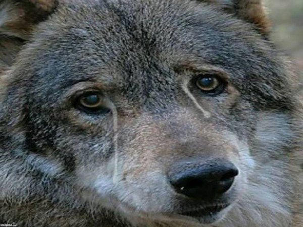 Une chose certaine, je ne comprendrais jamais l'humain qui reste indiff�rent � la souffrance animale pour moi un humain qui n'est pas capable de ressentir la souffrance ni la deviner n'est pas capable d'amour donc d'aimer et de respecter quoi que ce soit   jusqu'a sa propre personne   SIGNER UNE PETITION POURTANT NE PRENDS QUE 1 MN  mais non  l'indiff�rence totale  ne venez plus me dire que certains ou certaines d'entre vous �tes l� pour aider les animaux et encore moins que vous les aimez !!!!!!!!!!!!!