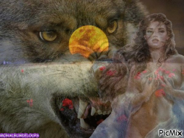 Pourquoi les loups n'attaquent pas l'homme ???  pourquoi le loup se m�fie de l'homme ??? IL A BIEN RAISON d'ailleurs de s'en m�fier le plus cruel des deux est bien l'homme !!!!!!!!!!!!!!!!!!!!! un loup te fixera dans les yeux un humain  jamais  rare de trouver la personne qui en a le cran  donc m�fiance !!!!!!!!!!!!
