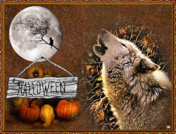 joyeux halloween � toutes les meutes de loups  avec cette  superbe vid�o