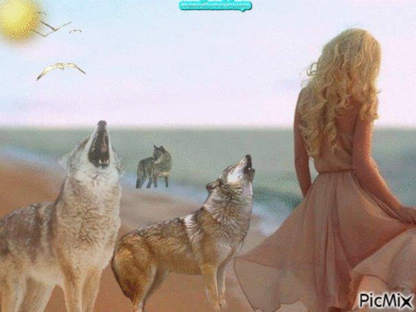 Des loups identifi�s de fa�on infaillible gr�ce � leur hurlement