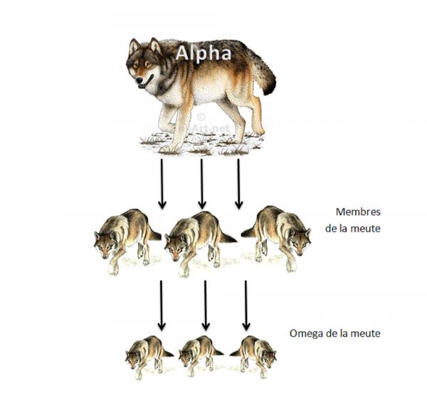 La hi�rarchie entre les loups