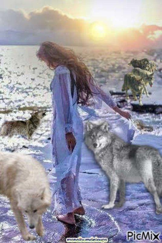 Quelle serait votre r�action si un loup se pr�sentait devant vous ???