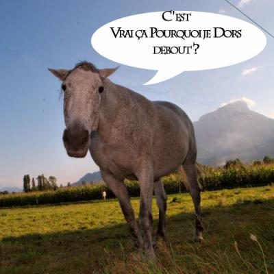 Mais dit moi l o la science pourquoi les chevaux - Quand retour de couche sans allaitement ...