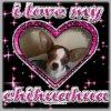 chihuahua91230