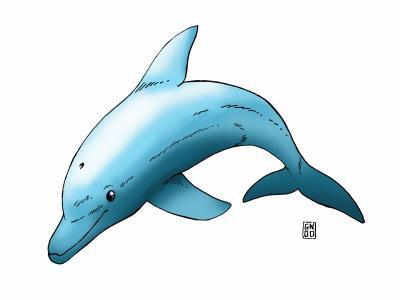 Dessin d 39 un dauphin en couleur et non en noir et blanc - Dauphin dessin couleur ...