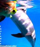 Photo de laviedesdauphins