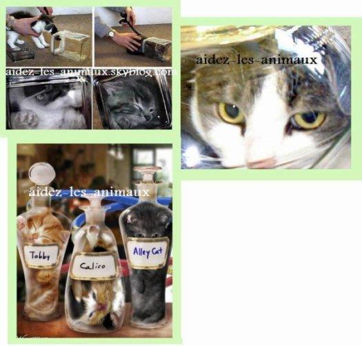 Bonzai kitten une salloprie qui a prie vie sauver les - A quel age couper les griffes d un chaton ...