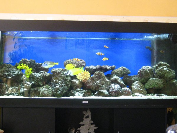 notre aquarium 400 litres en eau de mer mon ptit monde. Black Bedroom Furniture Sets. Home Design Ideas