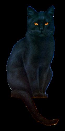 Le chat et le chat noir 3223397817_1_4_HB8gqdxb