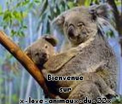 x-love-Animaux-du-22x
