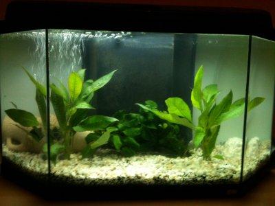 Nouveau aquarium rena 60l tout savoir sur le guppy ou for Aquarium rena
