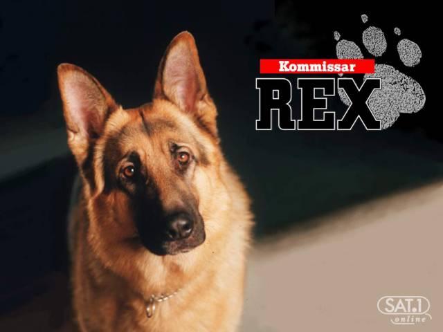 kommissarrex