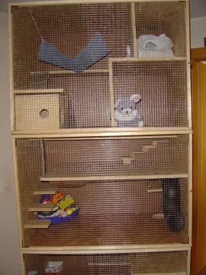 la maison du furet tous sur les furets de compagnie. Black Bedroom Furniture Sets. Home Design Ideas