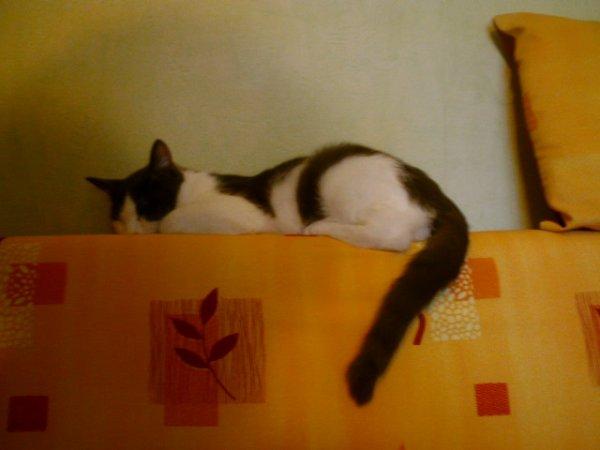 Perdu chaton � La Fert� sous Jouarre