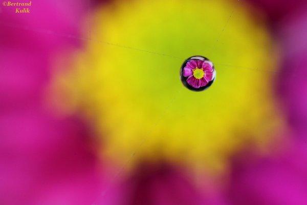 Web flower