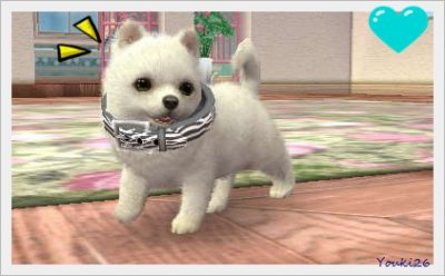 Nintendogs Cats Music Tours