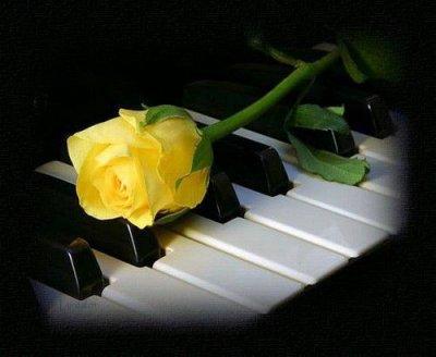 Une rose jaune sur un piano noisette 93 - Comment couper une rose sur un rosier ...