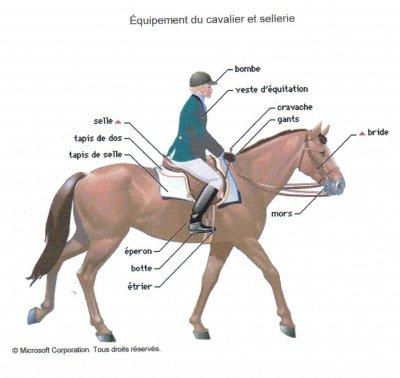 Le matériel d'équitation: