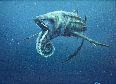 Les dents de la mer blog de buck - Requin enclume ...