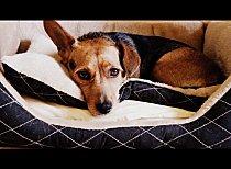 Comment fabriquer un panier pour chien?