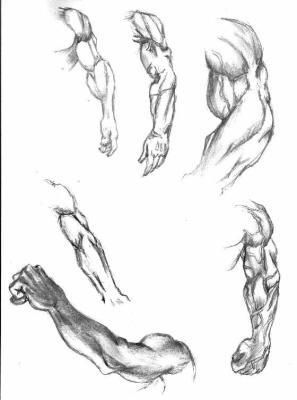 étude de bras gauche dessin art 6d4f3d791cd
