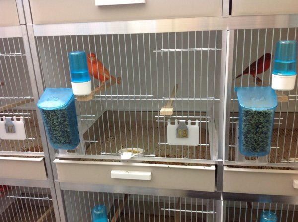 New Gehu Breeding Cages in