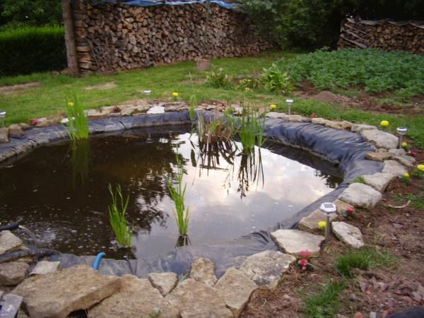 Bassin pour les poissons le jour cr ations de toutes sortes for Modele de bassin exterieur pour poisson