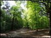 Les myst�res du Bois de Stambruges (Belgique)