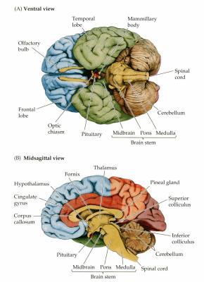 Souvenir souvenir la la la la la la la la manipulateur for Neurone miroir autisme