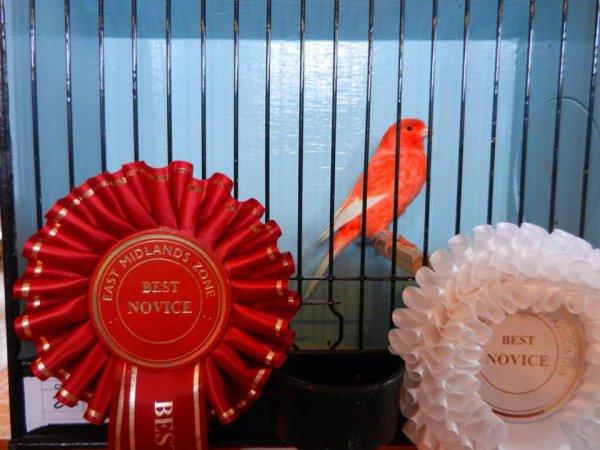 Best Novice Lipochrome EMZ 2014