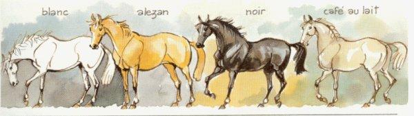 Le cheval, les galops, astuces