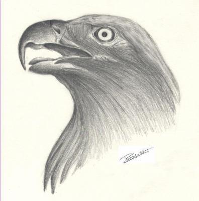 Tete d 39 aigle dessins et tatoos - Dessin de aigle ...