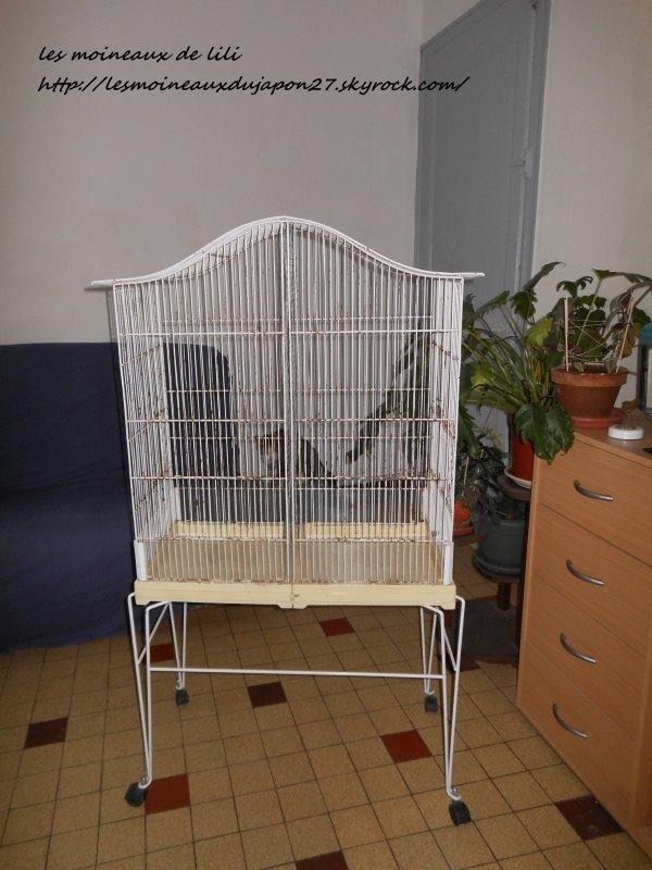 nouvelle cage d 39 occasion gratuite blog de. Black Bedroom Furniture Sets. Home Design Ideas