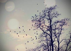 Je suis en train de tomber amoureuse de toi. S'il te plait repousse moi avant que je m'accroche beaucoup trop � toi.