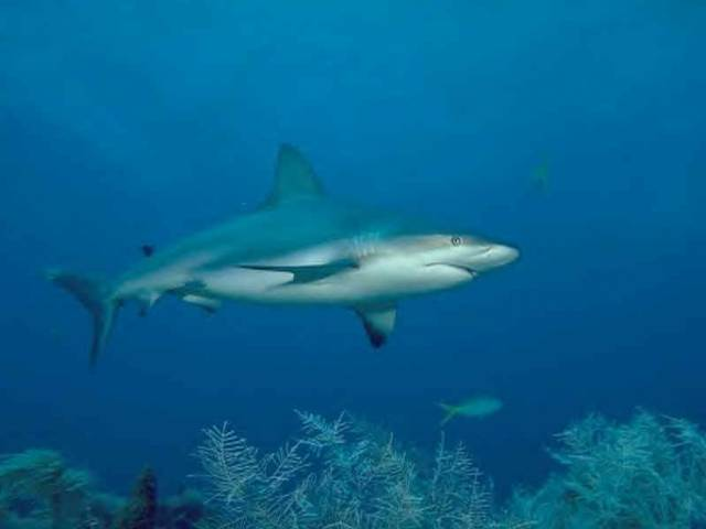 shark1302