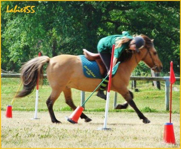 Les pony games
