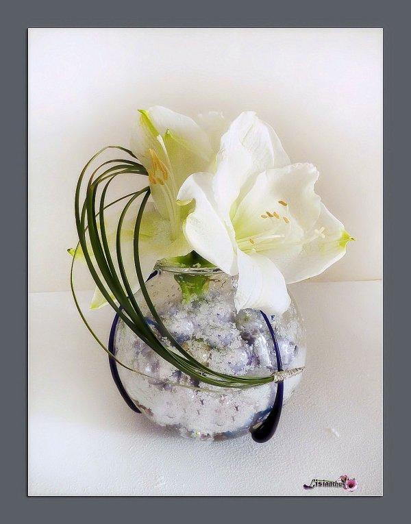 bouquet amaryllis