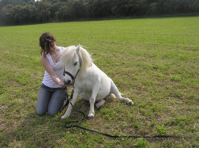 flamyhorses