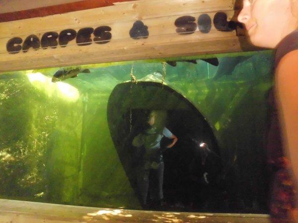 aquarium d amn 233 ville de louane1911