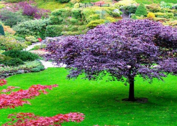 Jardin zen japonais watosay asanoclan samura philosophy for Bouddha dans un jardin