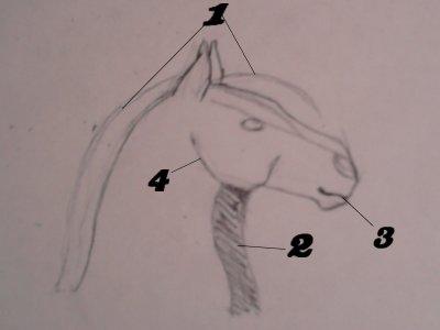 comment dessiner une bouche de 3 4