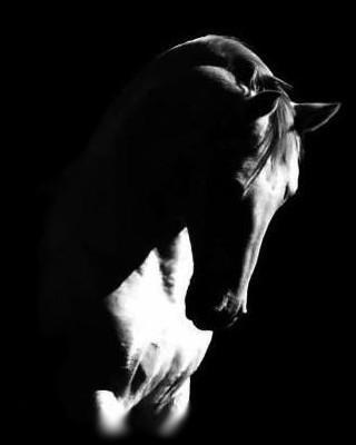 just-horses-just-a-life