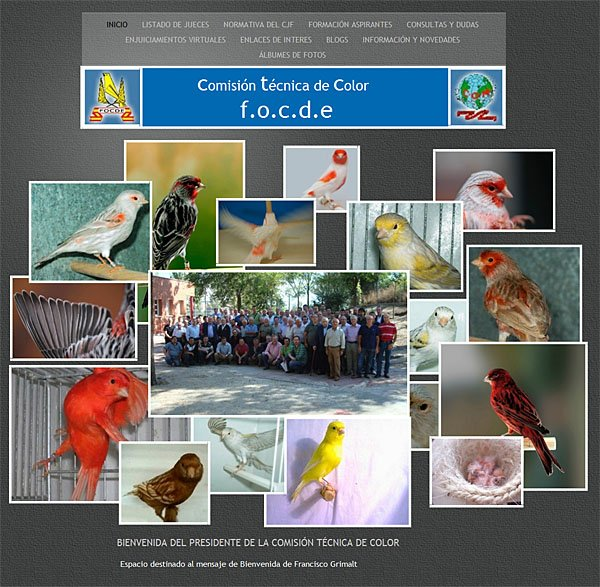 Website de la Comisi�n T�cnica de Color/FOCDE - Site de la Commission Technique des Canaris Couleurs/FOCDE
