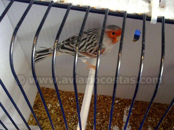 MUNDIAL DE ALMER�A 2012 - FOTOS DE CANARIOS