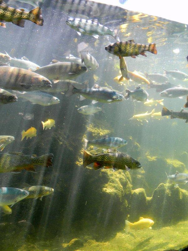 Petit tour a l aquarium du bugue 24 blog de xxspidermanxx for Petit aquarium