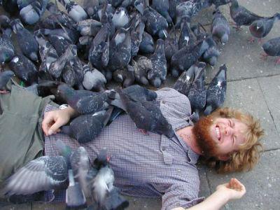blog de anti pigeons parisiens lutte contre les pigeons parisiens. Black Bedroom Furniture Sets. Home Design Ideas