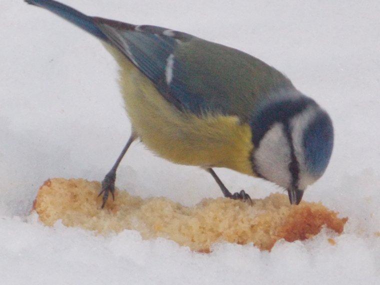 13 mars 2013 les oiseaux du ciel mes belles
