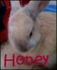 Honey-My-Rabbit