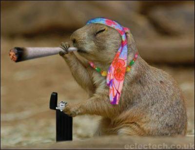 Photo insolite amusante d'un macaque qui fume un ptard