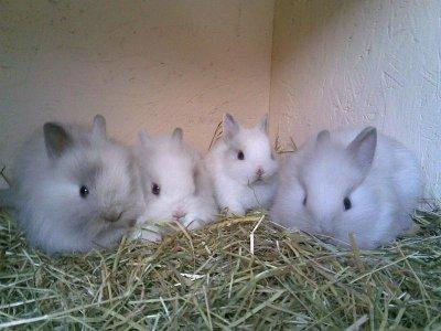 Blog de bretagne35 l 39 le aux lapins - 4 images 1 mot poussin lapin ...